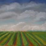 Black currant field