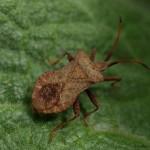 hlnk_bug