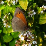 hlnk_butterfly