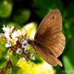 hlnk_butterfly2