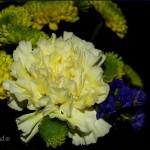 hlnk_carnation