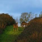 hlnk_deers