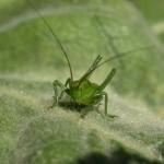 hlnk_grasshopper1