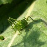 hlnk_grasshopper3