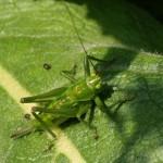 hlnk_grasshopper4