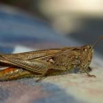hlnk_grasshopper5