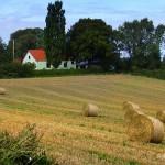 hlnk_harvest 2