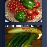 hlnk_harvest2009b