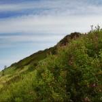 hlnk_hillside2