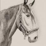 hlnk_horse
