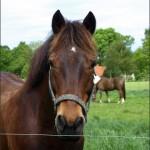 hlnk_horse1