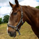 hlnk_horse2