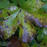 hlnk_leaves