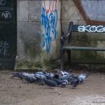 hlnk_pigeons