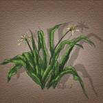 hlnk_plant