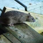 hlnk_rat