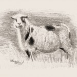 hlnk_sheep2