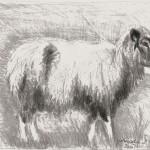 hlnk_sheepB2