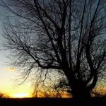 hlnk_silhouette