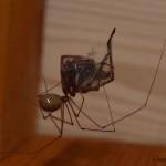 hlnk_spider2