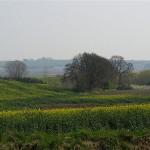 hlnk_springland