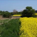 hlnk_springland12