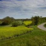 hlnk_springland16