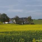 hlnk_springland4