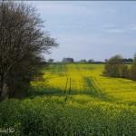 hlnk_springland5