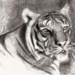 hlnk_tigerlille