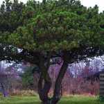 hlnk_tree