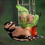hlnk_woodpecker